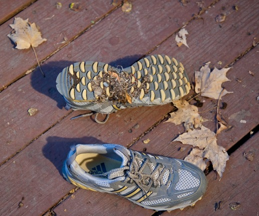 how to get dog poop off running shoes